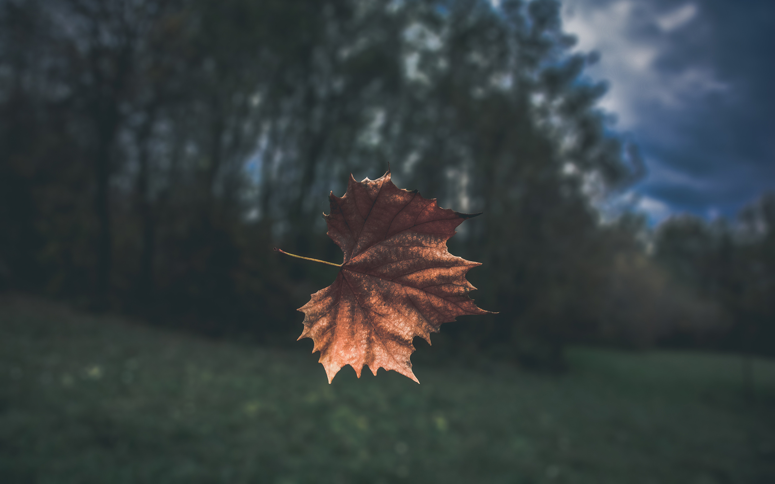 Leaf in the wind.